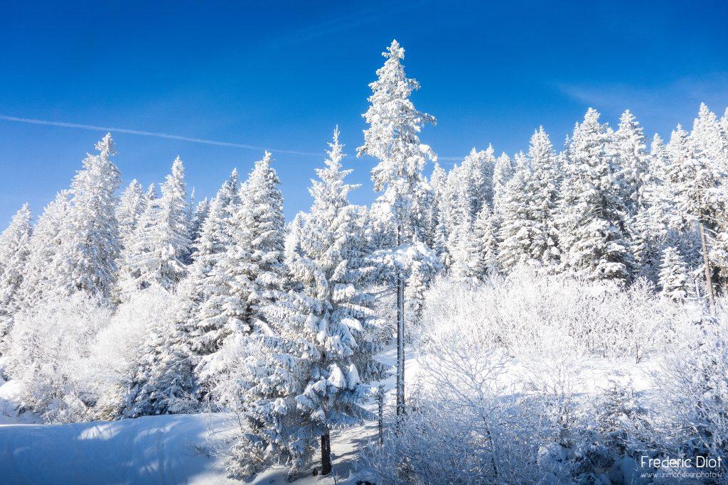 Foret glacée autour de Morzine